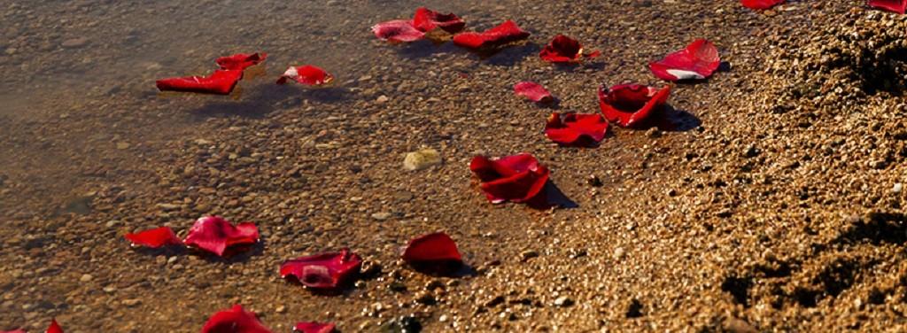 Rozenblaadjes spoelen aan nadat ze waren uitgestrooid samen met de as van de geliefde.